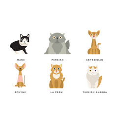 collection different cats breeds manx persian vector image