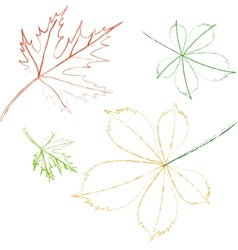 Contoured leaves vector