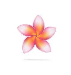 hawaii flower frangipani plumeria rubra vector image