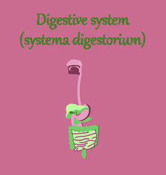 Human organ icon in flat style digestive system vector
