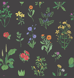 Beautiful floral seamless pattern with meadow vector