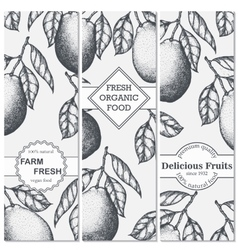 Three banner with hand-drawn pomelo vector image