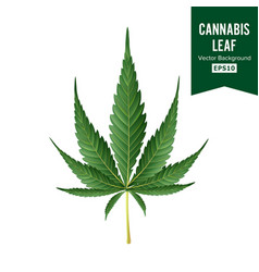 Cannabis medical green plant vector