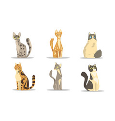 Collection different cats breeds beautiful pet vector