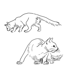 Set of sketch cats vector image