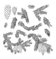 Set pine and spruce tree branches and cones vector