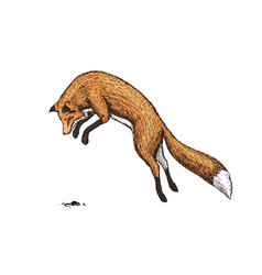 soaring red fox wild forest animal jumping up vector image
