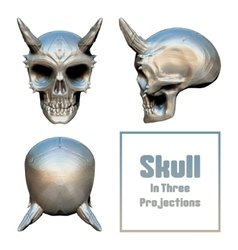 Skull In Three Projections vector image