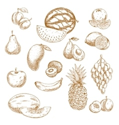 Whole and halved fresh fruits vintage sketch icons vector image vector image