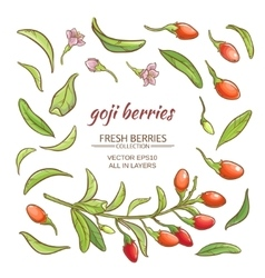 goji berry set vector image