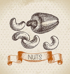 Hand drawn sketch nut vintage background of vector image