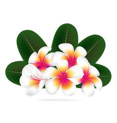 Hawaii flower frangipani white plumeria vector