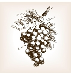 Bunch grapes hand drawn sketch style vector