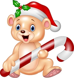 Cute baby bear holding Christmas candy vector image