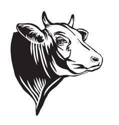 engraving contour portrait bull in profile vector image