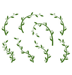 Set of green olive branches vector