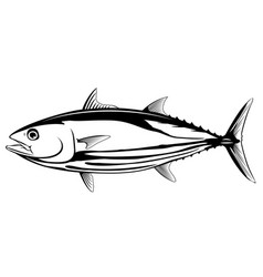 Skipjack tuna black and white fish vector