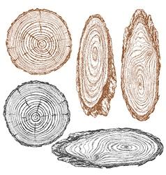 wood texture sketch vector image