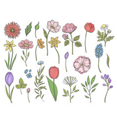 colored plants various vector image