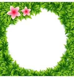 Fresh green leaves and tropical flowers frame vector