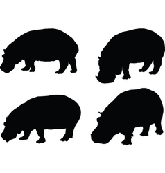 Hippo collection vector