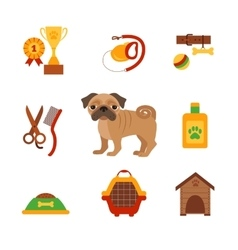Pug dog infografic concept with dog grooming vector image