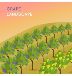 Vineyard Plantation of Grape-Bearing Vines vector image