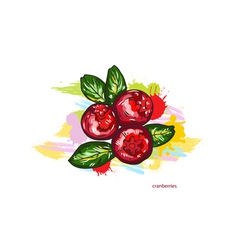 cranberries with colorful splashes vector image