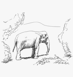 wild elephant in nature sketch hand drawn vector image