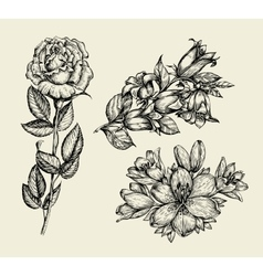 Flowers Hand drawn sketch flower bell rose lily vector image vector image
