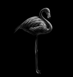 flamingo hand-drawn black and white sketch vector image