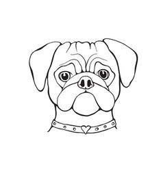 Head dog pug hand-painted portrait black and vector