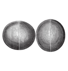 Oblate and prolate spheroid vintage vector