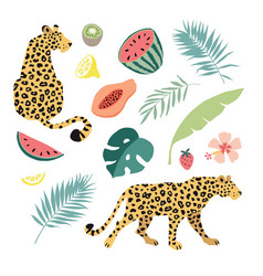 summer tropical graphic elements leopard cats vector image