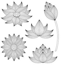 Lotus flower set on white background vector image