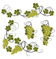 Set from the vine vector image vector image
