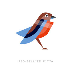 abstract of red bellied pitta vector image