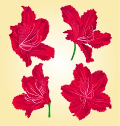Blossoms red rhododendron mountain shrub vector