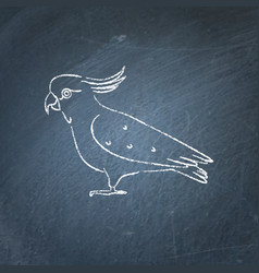 Cockatoo parrot icon sketch on chalkboard vector