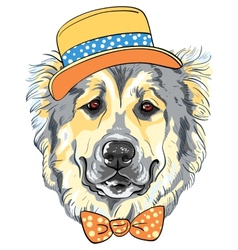 dog Caucasian Shepherd Dog breed in hat and vector image