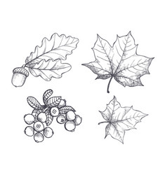 maple leaf and autumnal acorn hanging set vector image