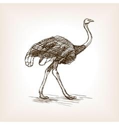 Ostrich sketch vector