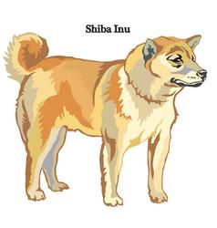 Shiba inu vector