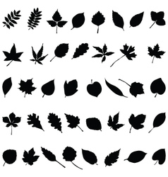 Silhouettes of foliage vector