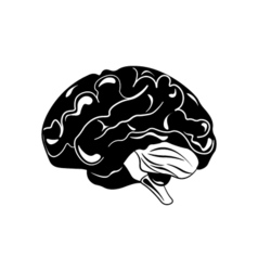 Brain hand drawn isolated on a white vector image