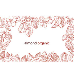 Almond frame realistic sketch vector