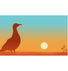 Landscape of bird in beach silhouettes vector image