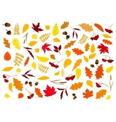 Autumn leaves herbs berries and acorns vector image vector image