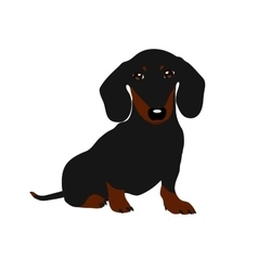 Dachshund dog Cute puppy on a white background vector