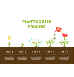 Planting seed process banner stages growth of vector
